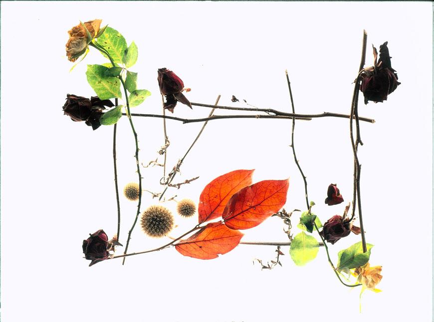 08_01_Pflanzen