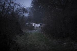 Copyright Jörn Lehmann-Photographie